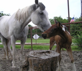 Mom and baby, June 2007